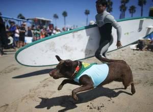 Existe un campeonato de surf para perros [FOTOS]