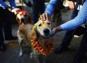 [GALERÍA] El festival que honra a los perritos por ser nuestros amigos