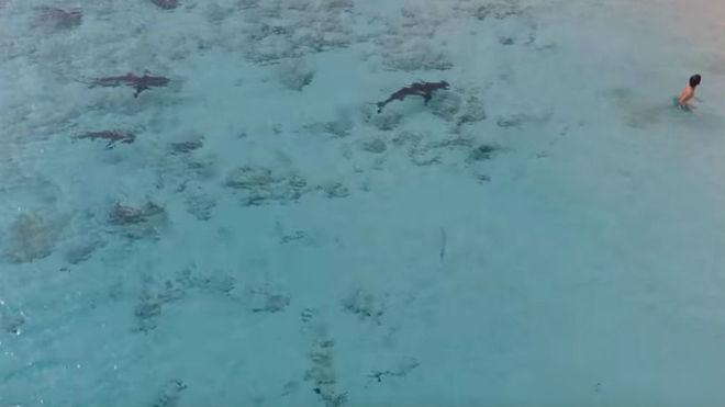 Cuatro tiburones rodean a un niño en una playa de las Bahamas y se salva de milagro