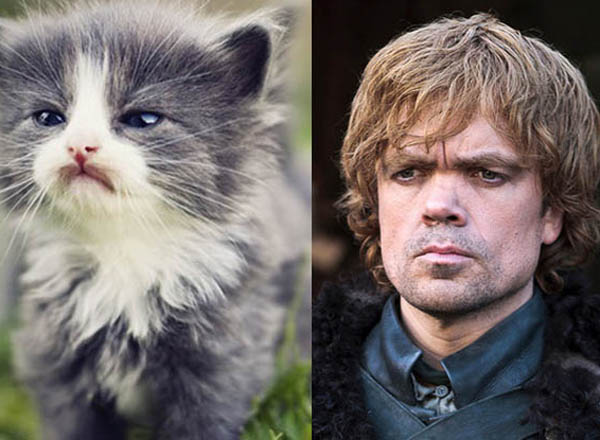 Game of Thrones y sus dobles en gatos