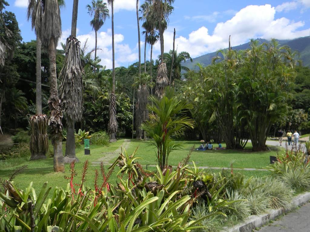 Jard n bot nico de caracas points a la m for Jardin botanico nocturno 2016